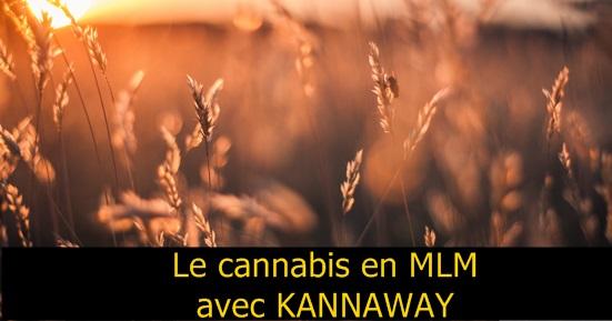 Cannabis MLM Kannaway