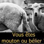 Mouton ou bélier, quel destin allez-vous choisir ? Faites-le test !