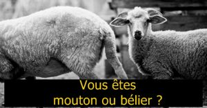 Mouton ou bélier